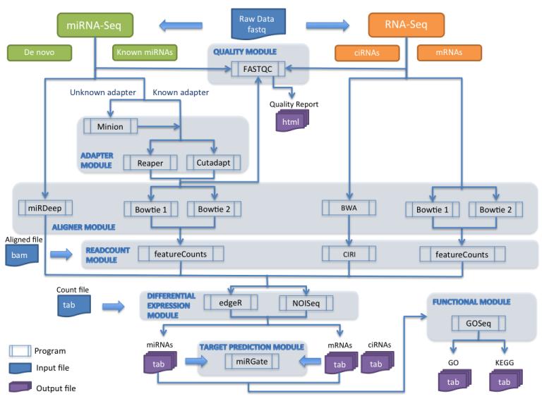 miARma-Seq – a comprehensive tool for miRNA, mRNA and circRNA analysis