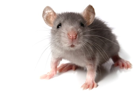 Improved definition of the mouse transcriptome via targeted RNA sequencing