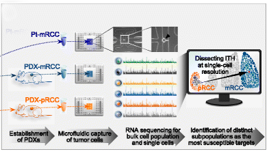 Application of single-cell RNA-seq in the design of an anticancer regimen