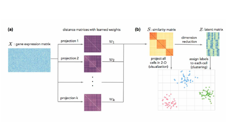 SIMLR – Visualization and analysis of single-cell RNA-seq data by kernel-based similarity learning