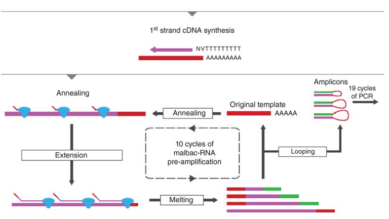RNA-Seq methods for transcriptome analysis