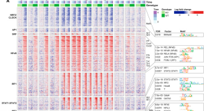 TF-seq – Simultaneous Pathway Activity Inference and Gene Expression Analysis Using RNA Sequencing