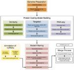 The Ensembl gene annotation system