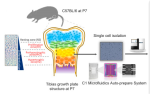 Sinova – Systematic Reconstruction of Molecular Cascades Using Single-Cell RNA-Seq