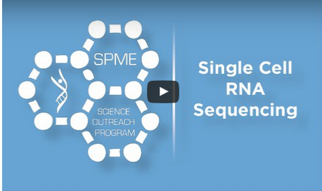 Single Cell RNA Sequencing – Finding a cure for DIPG