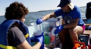 UW-Madison lab decodes lake bacterial cycles with RNA sequencing