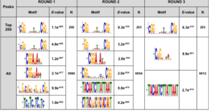 Combinatorial Analysis Performed Using gSELEX-Seq and RNA-Seq