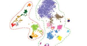 Single nuclei RNA-Seq supplies snapshot of gene expression across brain
