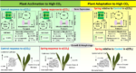 RNA-Seq shows plants are adapting to increasing atmospheric CO2