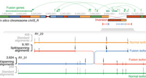 Spliced synthetic genes as internal controls in RNA sequencing experiments