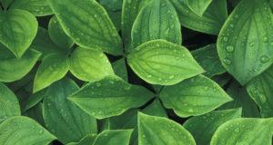 PcircRNA_finder – circRNA prediction in plants