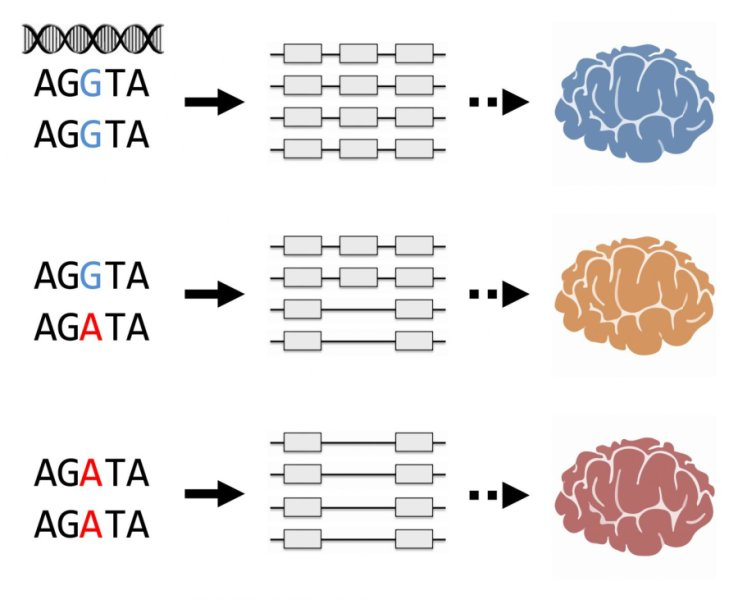 Researchers identify genetic variants controlling alternative from science daily new research has identified sections of dna associated with altered regulation of gene expression underlying schizophrenia ccuart Gallery