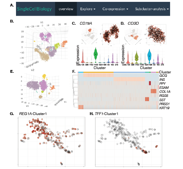 CellView – Interactive Exploration Of High Dimensional Single Cell