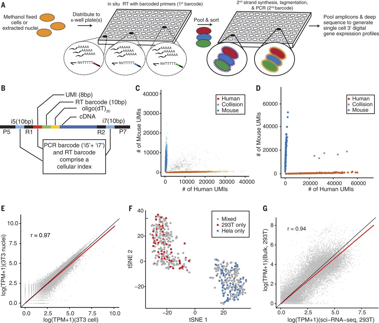Comprehensive single cell transcriptional profiling of a scirna ccuart Gallery