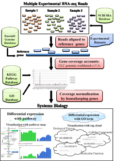 RNA-seq Coverage Effects on Biological Pathways and GO Tag Clouds