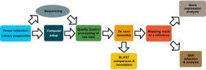 The simple fool's guide to population genomics via RNA-Seq