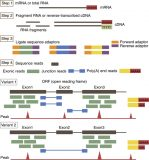 Revolution of nephrology research by deep sequencing: ChIP-seq and RNA-seq