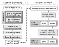 The GATK Best Practices for variant calling on RNAseq