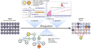 iRegulon: From a Gene List to a Gene Regulatory Network