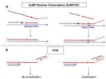 Extendable blocking probe in reverse transcription for analysis of RNA variants with superior selectivity