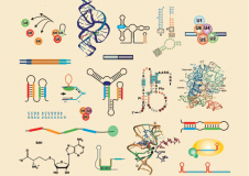 A Review of the Methods for Processing High-Throughput RNA Sequencing Data