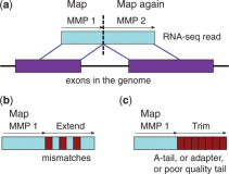 Mapping RNA-seq Reads with STAR