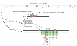 RapMap – Unreasonably Fast and Accurate Transcriptome Mapping