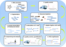 A detailed protocol for stranded RNA-sequencing