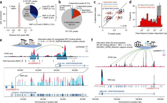 Fine-mapping cellular QTLs with RASQUAL and ATAC-seq