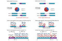 EBChangePoint – An empirical Bayes change-point model for identifying 3′ and 5′ alternative splicing by RNA-Seq