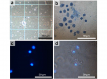 A protocol for sequencing the transcriptome of a single nuclei