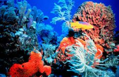 Researchers use RNA-Seq to understand bleaching  of caribbean reef-building corals