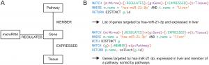 miTALOS v2 – Analyzing Tissue Specific microRNA Function