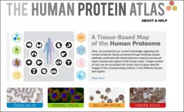 The inclusion of transcriptome anaylsis dataset to the Human Protein Atlas database makes it even more comprehensive