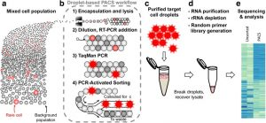 RNA-Seq following PCR-based sorting reveals rare cell transcriptional signatures