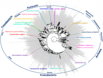 Comparative transcriptomics across the prokaryotic tree of life