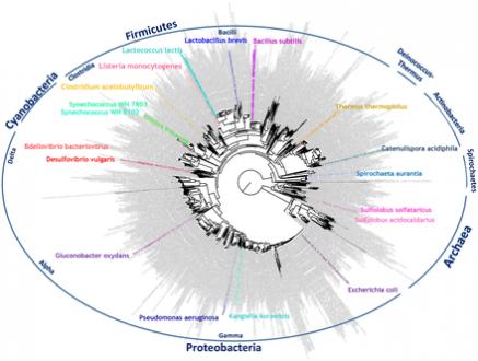Comparative transcriptomics across the prokaryotic tree of life