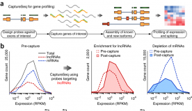 Quantitative gene profiling of long noncoding RNAs with targeted RNA sequencing