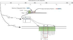 RapMap – a rapid, sensitive and accurate tool for mapping RNA-seq reads to transcriptomes