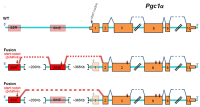 A Novel Analytical Strategy to Identify Fusion Transcripts between Repetitive Elements and Protein Coding-Exons Using RNA-Seq