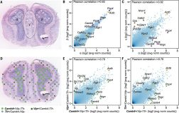 Spatial transcriptomics – quantitative gene expression data and visualization of the distribution of mRNAs within tissue sections