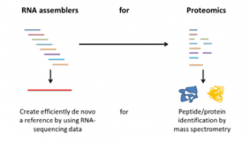 Alternative transcriptome assembly tools improve proteomics informed by transcriptomics (PIT) workflow