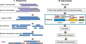 Bioinformatics for RNA‐Seq Data Analysis