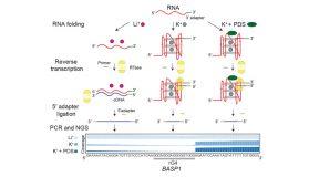 rG4-seq – a new method for RNA G-quadruplex (rG4) transcriptome profiling
