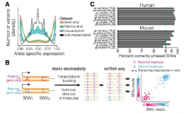 scphaser – haplotype inference using single-cell RNA-seq data
