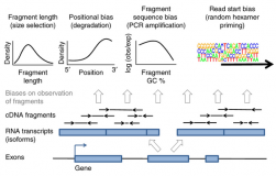 Modeling of RNA-seq fragment sequence bias reduces systematic errors in transcript abundance estimation