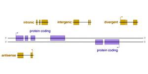 RNA-Seq analysis of lncRNAs