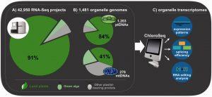 ChloroSeq – an organelle RNA-Seq bioinformatics pipeline