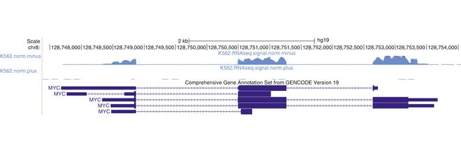 A Bioinformatics Pipeline for Transcriptome Sequencing Analysis