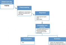 A workflow for analysis of small RNA sequencing data